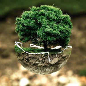 Baum_Naturschutz