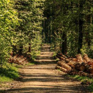 Zukunft des Waldes Game